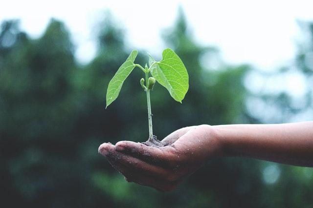 sadzenie warzyw