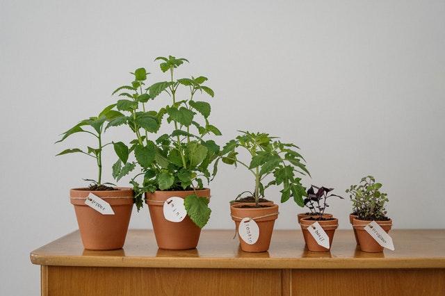 warzywa sadzenie